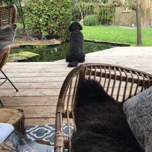 Elvis op de veranda...